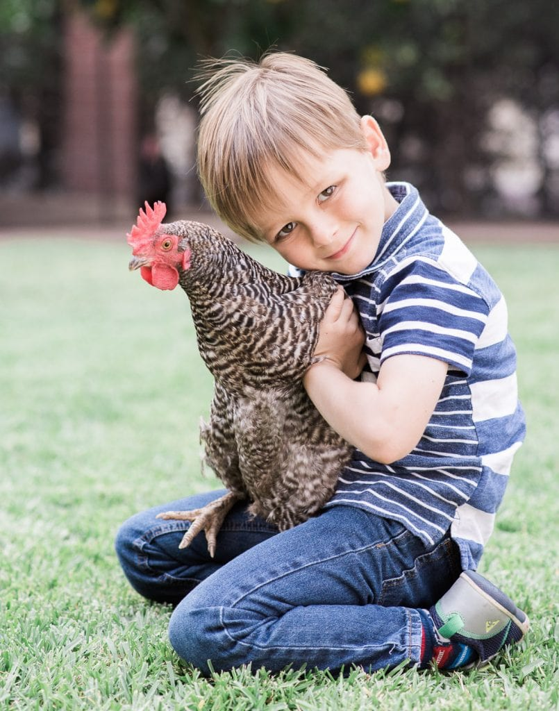 Family photo boy with chicken
