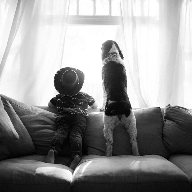 boy and dog on couch looking out window